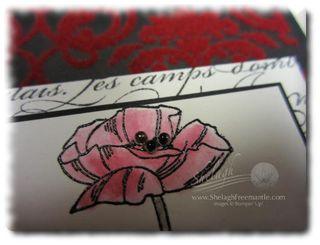 Poppy#2